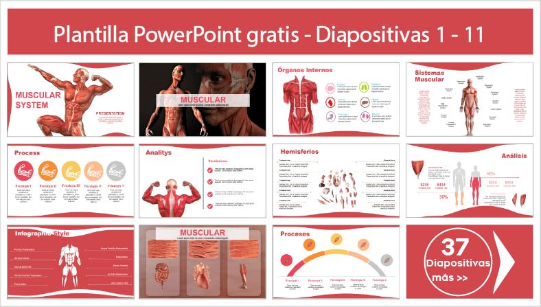 plantillas del sistema muscular para PowerPoint para descargar.